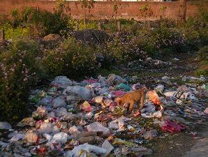 Waste dumped on the roadside in an upscale locality in Dehradurn.