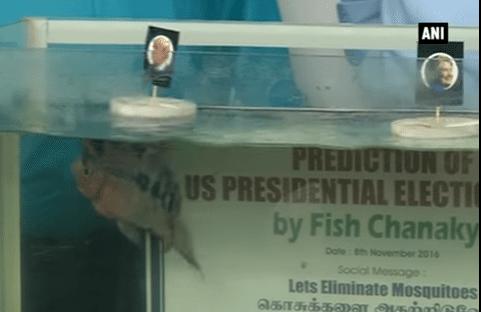 Fish 'predicts' Donald Trump as next US President