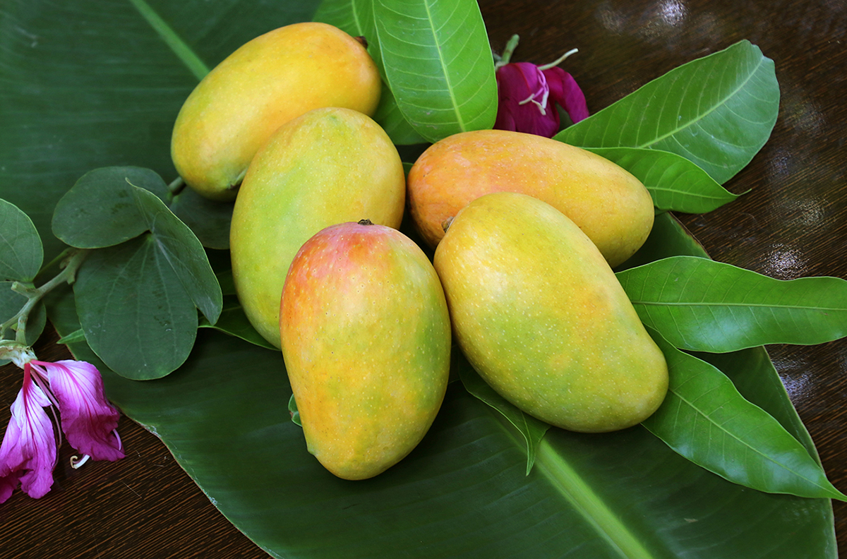 Best places to buy Indian mangoes in the United States